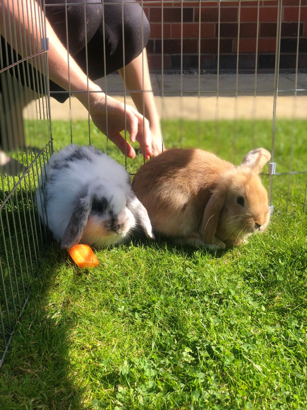 Flopsy and Snowball the homes bunny rabbits